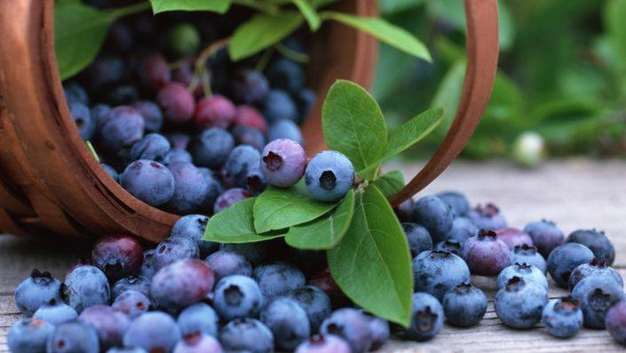 blueberry supplier