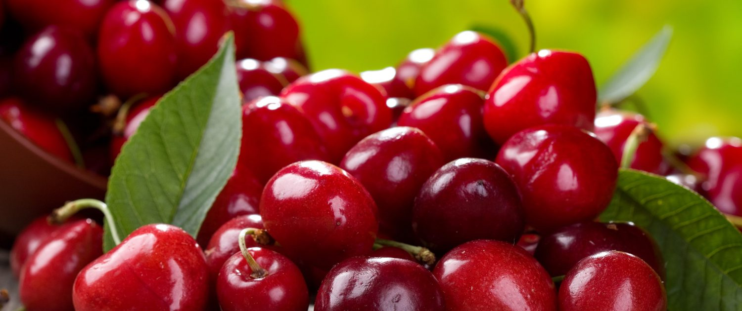 cherry producers and suppliers