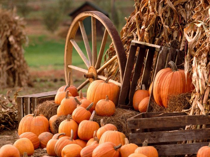 pumpkin suppliers