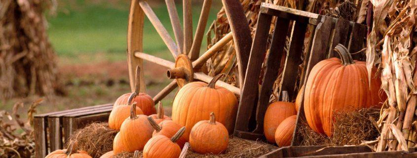 pumpkin suppliers
